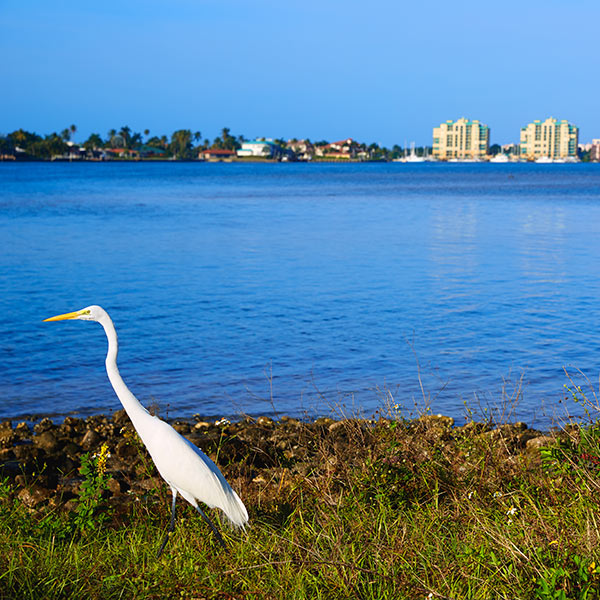 Search Marco Island Homes
